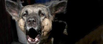 Борба с бездомни кучета