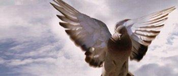 Борба с гълъби