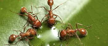 Борба с мравки
