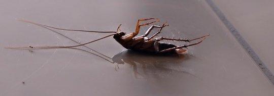Борба с хлебарки, как да се предпазим