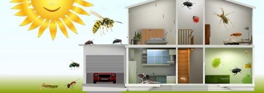 ДДД услуги и пръскане за апартамента и къщата