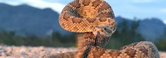 Препарат против змии и гущери